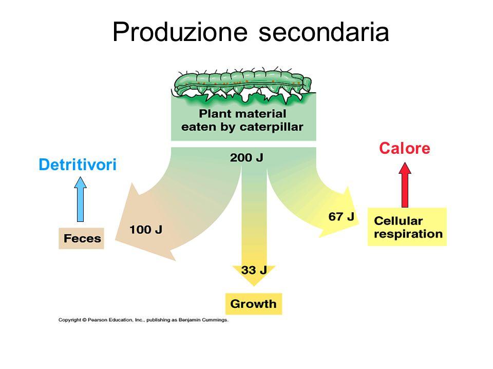 Detritivori Calore Produzione secondaria