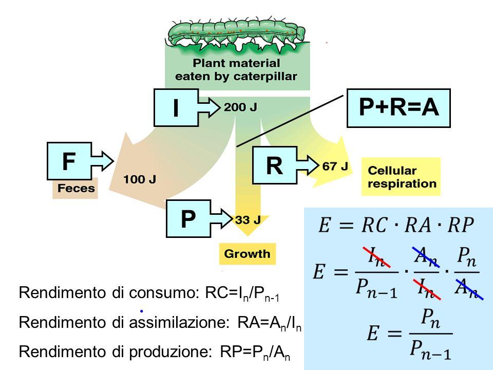 I R P F P+R=A Rendimento di consumo: RC=I n /P n-1 Rendimento di assimilazione: RA=A n /I n Rendimento di produzione: RP=P n /A n