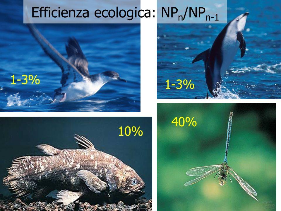 1-3% 10% 40% Efficienza ecologica: NP n /NP n-1 1-3%