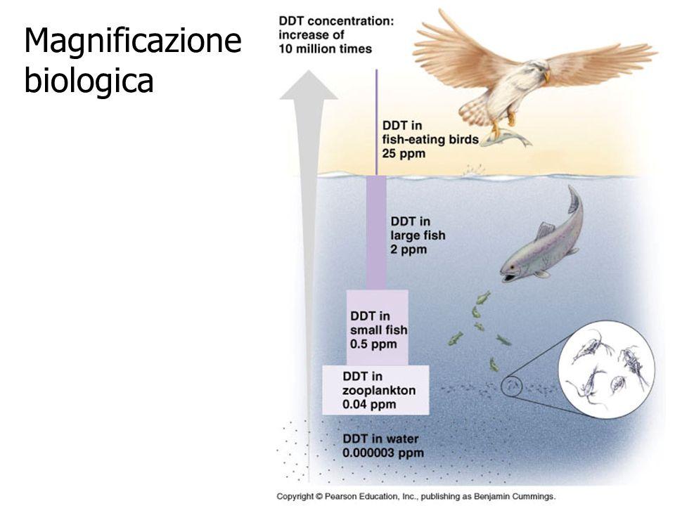 Magnificazione biologica