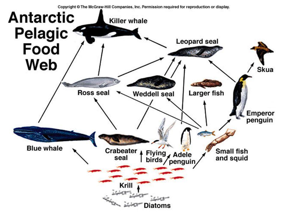 Dinamica degli ecosistemi: 1- Flussi di energia 2- Cicli biogeochimici ENERGIA – Non puo essere riciclata, fluisce attraverso gli ecosistemi, proviene da una fonte esterna.