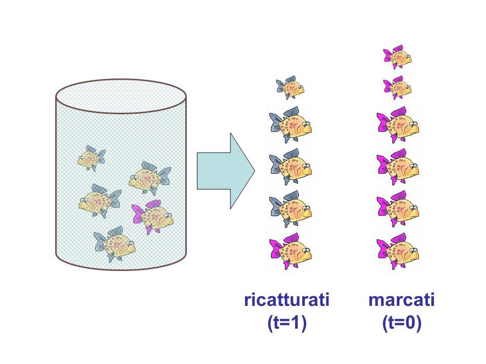 ricatturati (t=1) marcati (t=0)
