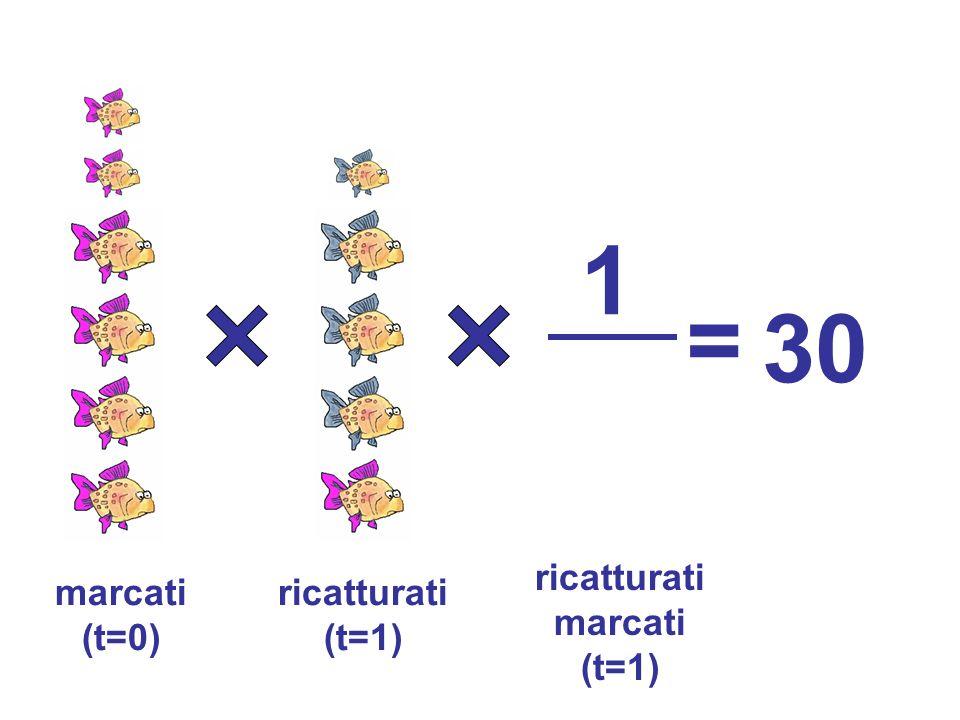 ricatturati (t=1) marcati (t=0) 1 = 30 ricatturati marcati (t=1)