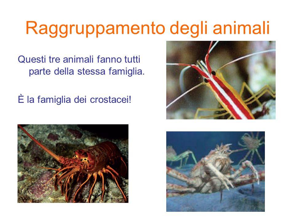 Raggruppamento degli animali Questi tre animali fanno tutti parte della stessa famiglia. È la famiglia dei crostacei!