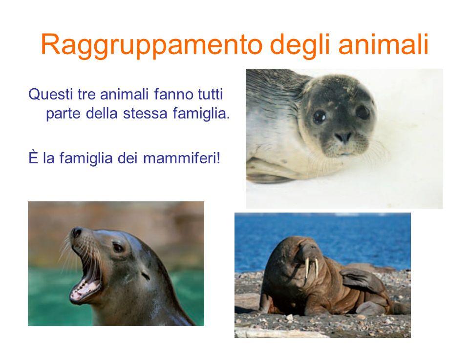 Raggruppamento degli animali Questi tre animali fanno tutti parte della stessa famiglia. È la famiglia dei mammiferi!