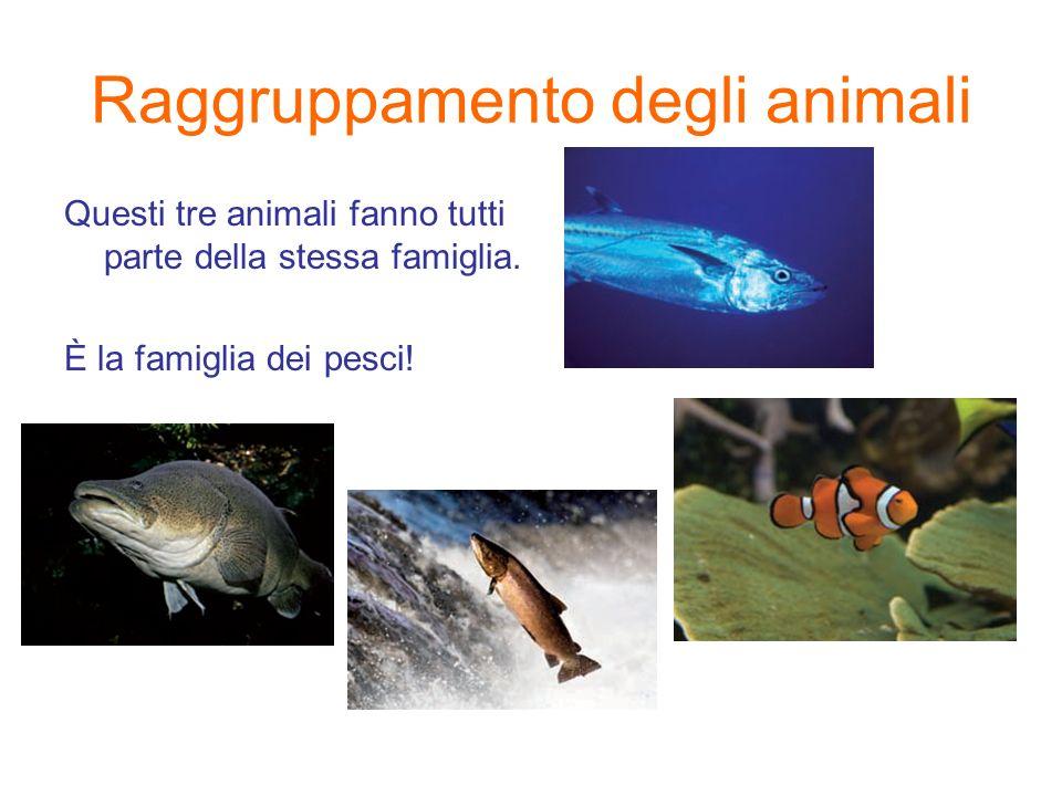 Raggruppamento degli animali Questi tre animali fanno tutti parte della stessa famiglia. È la famiglia dei pesci!