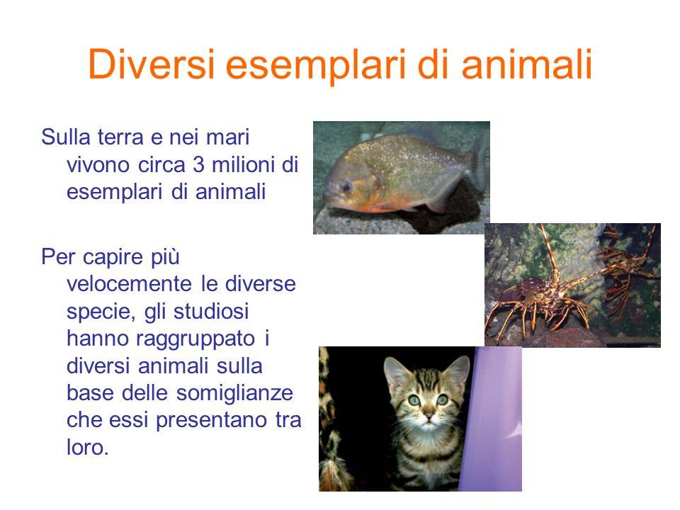 Diversi esemplari di animali Sulla terra e nei mari vivono circa 3 milioni di esemplari di animali Per capire più velocemente le diverse specie, gli s