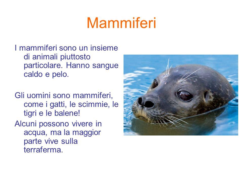 Mammiferi I mammiferi sono un insieme di animali piuttosto particolare. Hanno sangue caldo e pelo. Gli uomini sono mammiferi, come i gatti, le scimmie