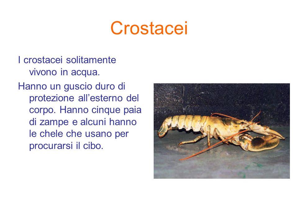 Crostacei I crostacei solitamente vivono in acqua. Hanno un guscio duro di protezione allesterno del corpo. Hanno cinque paia di zampe e alcuni hanno