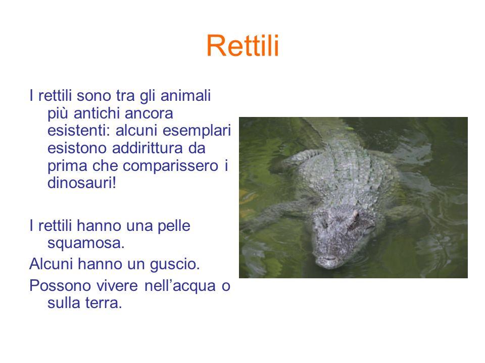 Rettili I rettili sono tra gli animali più antichi ancora esistenti: alcuni esemplari esistono addirittura da prima che comparissero i dinosauri! I re