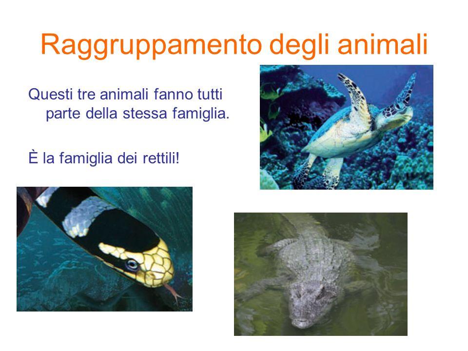Raggruppamento degli animali Questi tre animali fanno tutti parte della stessa famiglia.