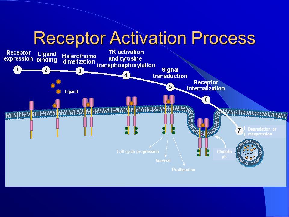 Elenco alcuni farmaci biologici Tumor Type Overexpressing ErbB-1 e ErbB-2 (%) Farmaco biologico Bladder31%-48%; 7%-36%In studio Breast14%-91%; 10%-37%Trastuzumab (Herceptin), Lapatinib (Tyverb); Pertuzumab.