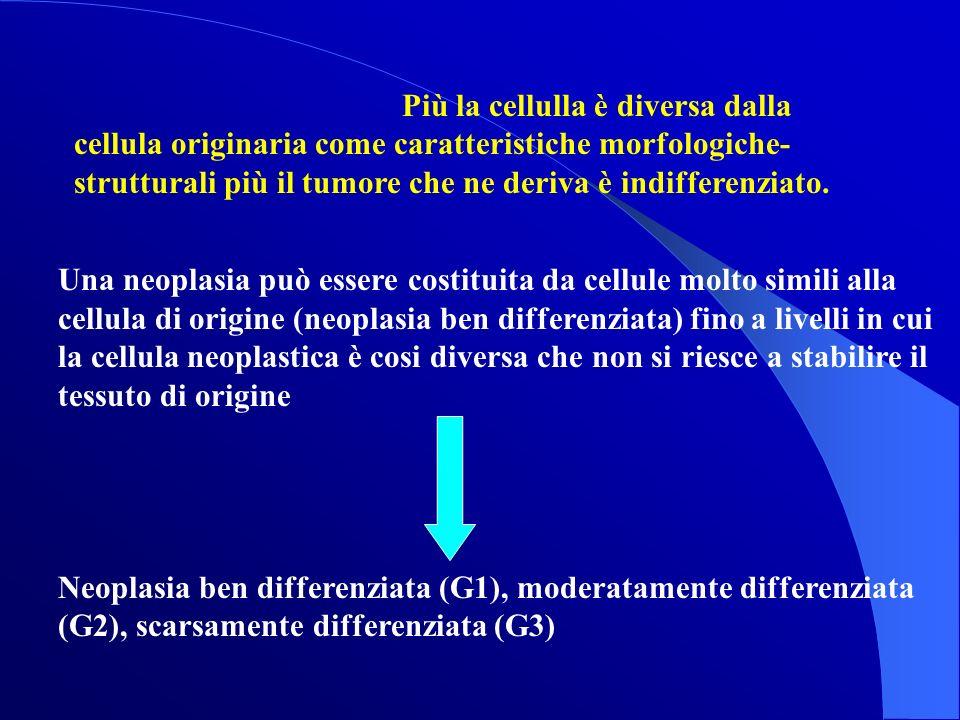 Più la cellulla è diversa dalla cellula originaria come caratteristiche morfologiche- strutturali più il tumore che ne deriva è indifferenziato. Una n