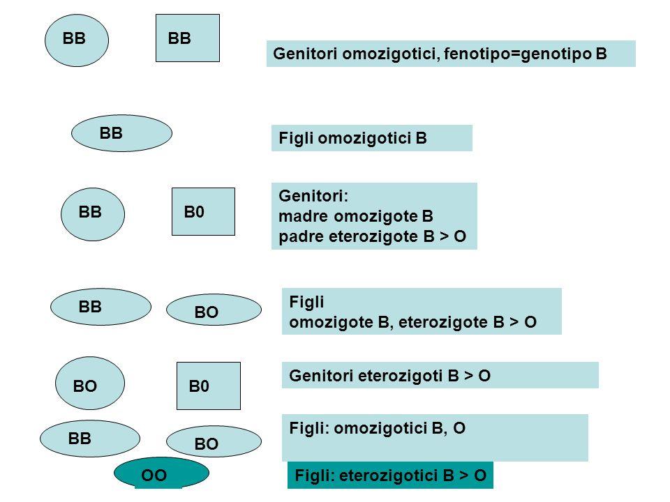 BB Genitori omozigotici, fenotipo=genotipo B Figli omozigotici B BB B0 BB BO Genitori: madre omozigote B padre eterozigote B > O Figli omozigote B, et