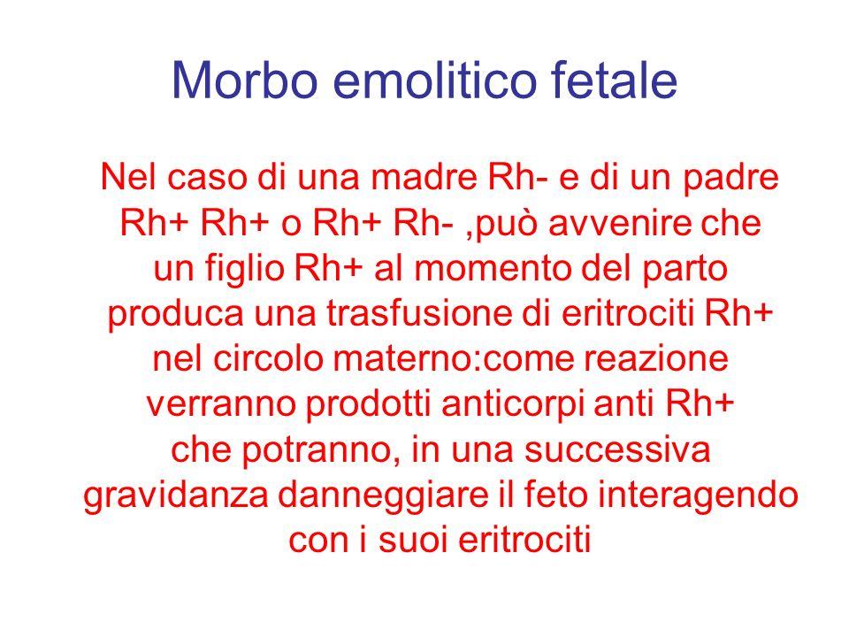 Morbo emolitico fetale Nel caso di una madre Rh- e di un padre Rh+ Rh+ o Rh+ Rh-,può avvenire che un figlio Rh+ al momento del parto produca una trasf