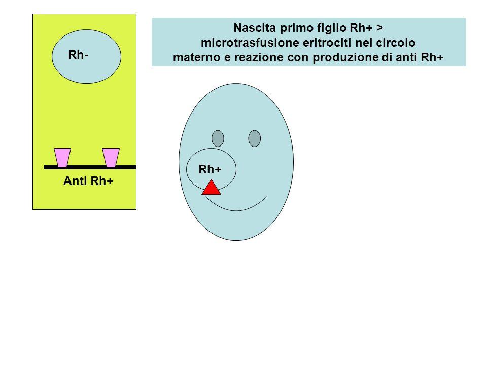 Rh- Nascita primo figlio Rh+ > microtrasfusione eritrociti nel circolo materno e reazione con produzione di anti Rh+ Anti Rh+ Rh+