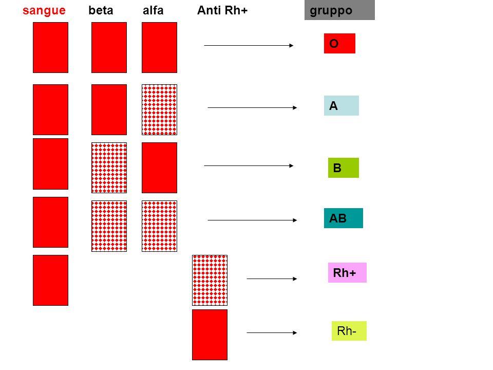 betaalfaAnti Rh+ O A B AB Rh+ Rh- sanguegruppo