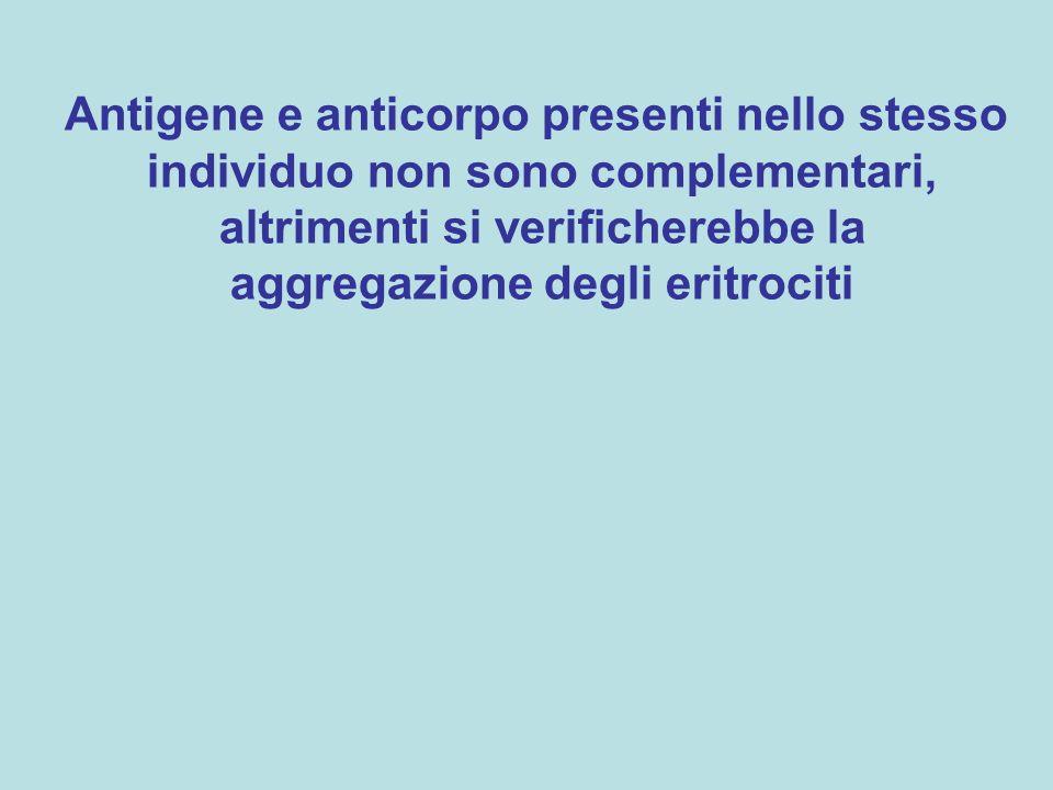 Antigene e anticorpo presenti nello stesso individuo non sono complementari, altrimenti si verificherebbe la aggregazione degli eritrociti