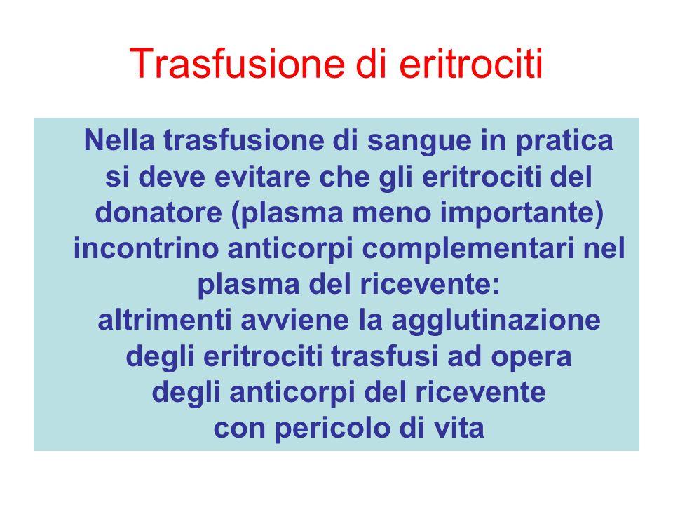Trasfusione di eritrociti Nella trasfusione di sangue in pratica si deve evitare che gli eritrociti del donatore (plasma meno importante) incontrino a