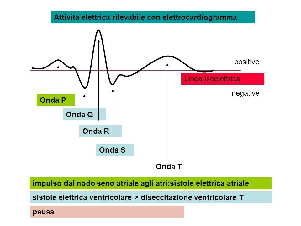 Attività elettrica rilevabile con elettrocardiogramma Onda P Onda Q Onda R Onda S Onda T impulso dal nodo seno atriale agli atri:sistole elettrica atr