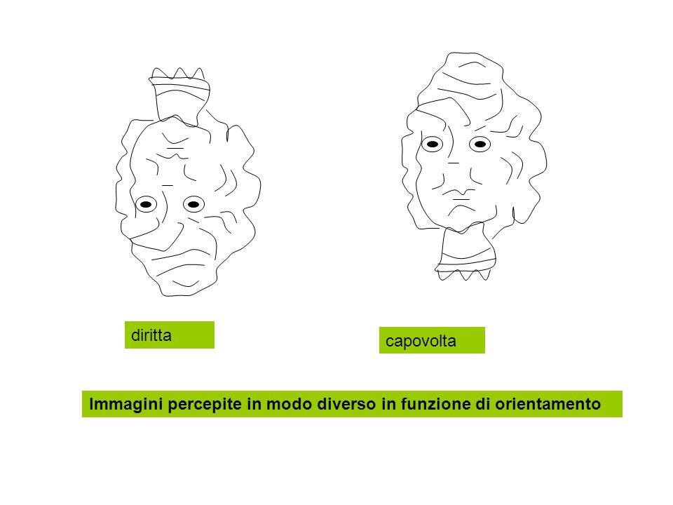 Immagini percepite in modo diverso in funzione di orientamento diritta capovolta