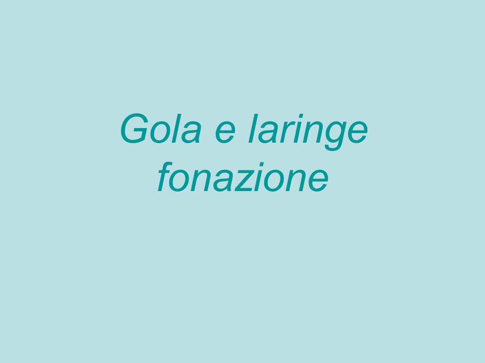 Gola e laringe fonazione