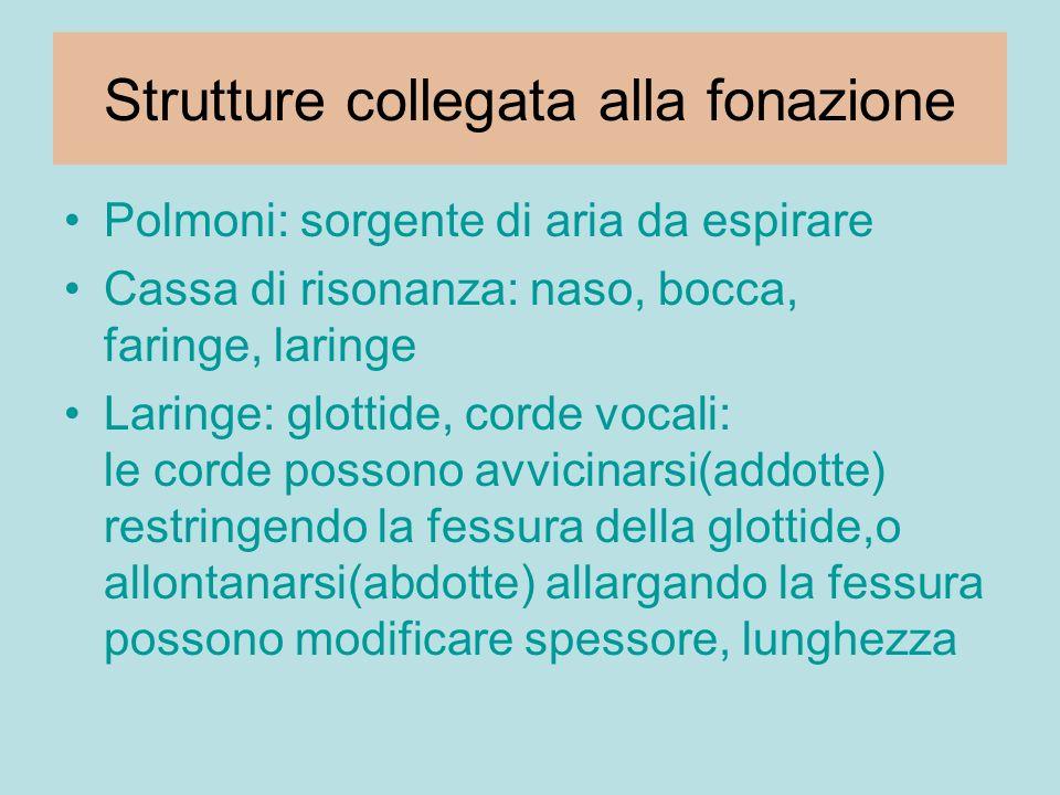 Strutture collegata alla fonazione Polmoni: sorgente di aria da espirare Cassa di risonanza: naso, bocca, faringe, laringe Laringe: glottide, corde vo