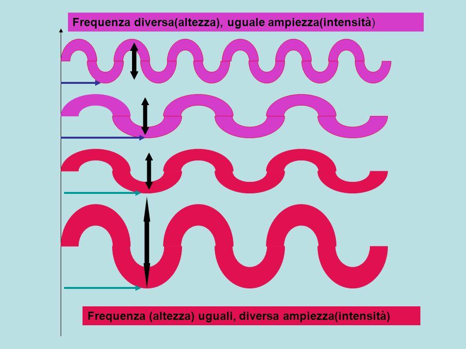 Frequenza (altezza) uguali, diversa ampiezza(intensità) Frequenza diversa(altezza), uguale ampiezza(intensità)