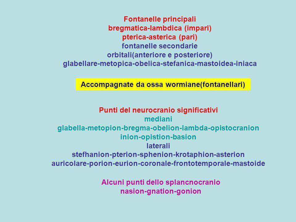 Fontanelle principali bregmatica-lambdica (impari) pterica-asterica (pari) fontanelle secondarie orbitali(anteriore e posteriore) glabellare-metopica-