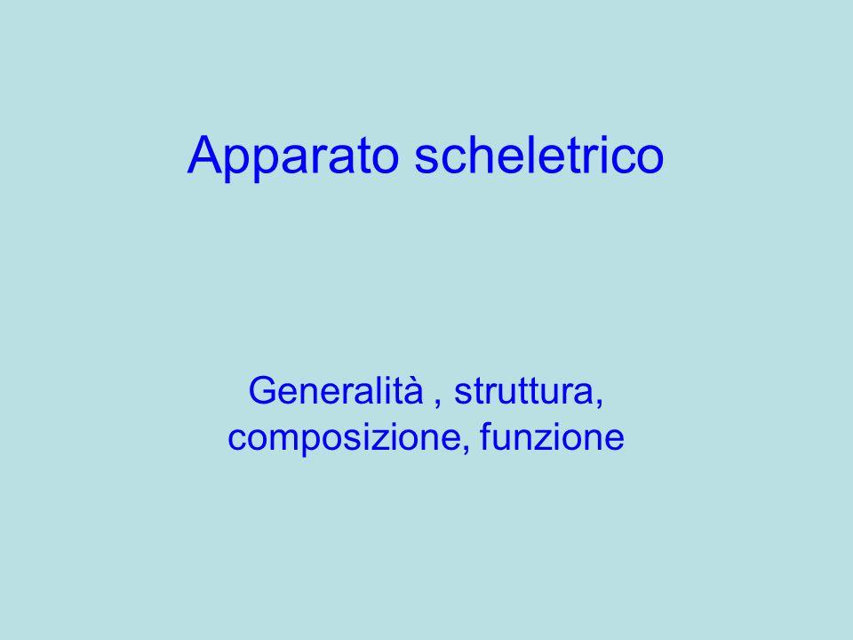 Apparato scheletrico Generalità, struttura, composizione, funzione