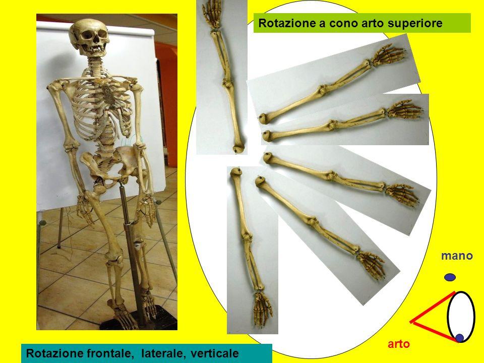 Rotazione a cono arto superiore arto mano Rotazione frontale, laterale, verticale