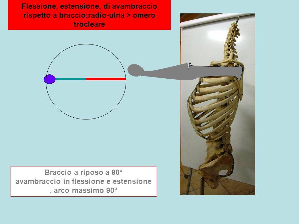 Flessione, estensione, di avambraccio rispetto a braccio:radio-ulna > omero trocleare Braccio a riposo a 90* avambraccio in flessione e estensione, arco massimo 90°