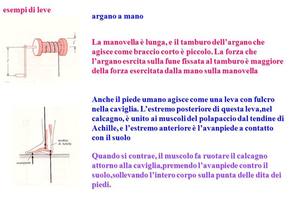 esempi di leve argano a mano La manovella è lunga, e il tamburo dellargano che agisce come braccio corto è piccolo. La forza che largano esrcita sulla