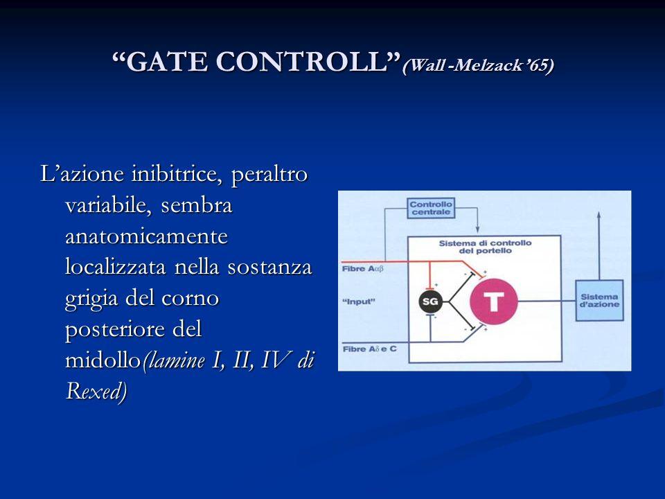 GATE CONTROLL (Wall -Melzack 65) Lazione inibitrice, peraltro variabile, sembra anatomicamente localizzata nella sostanza grigia del corno posteriore