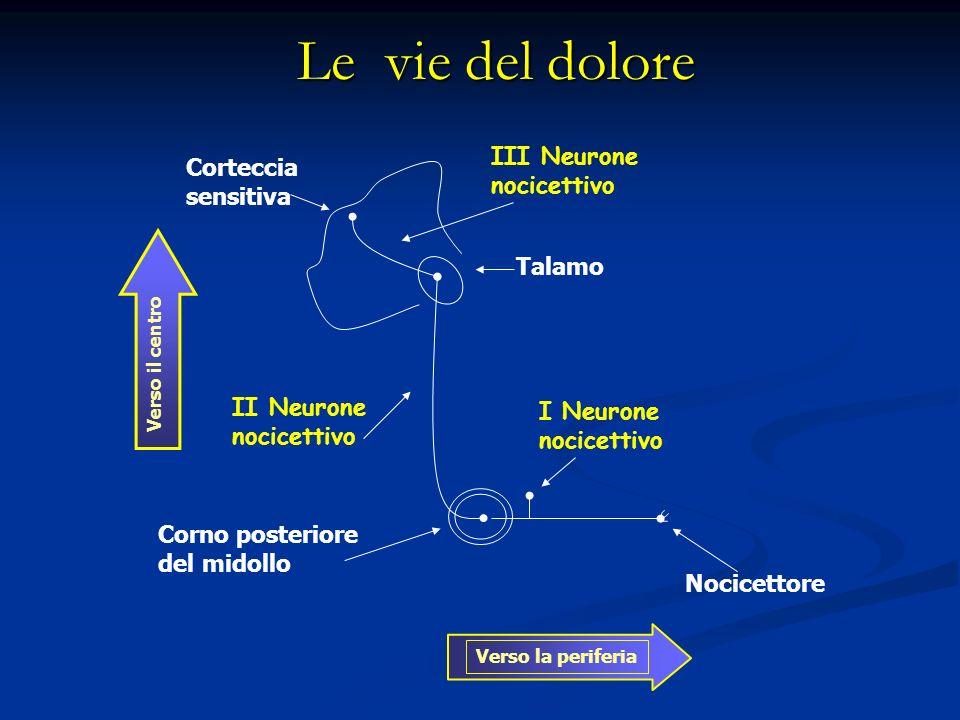 Corna Dorsali Midollari Le corna dorsali midollari sono sede di sinapsi tra le fibre afferenti primarie e i neuroni di II° ordine Le corna dorsali midollari sono sede di sinapsi tra le fibre afferenti primarie e i neuroni di II° ordine Contengono neuroni interessati nella trasmissione e modulazione di stimoli nocicettivi Contengono neuroni interessati nella trasmissione e modulazione di stimoli nocicettivi Il II° neurone è capace di elaborare stimoli nocivi e non- alla base della teoria del gate control sulla modulazione del dolore Il II° neurone è capace di elaborare stimoli nocivi e non- alla base della teoria del gate control sulla modulazione del dolore Neuroni di II ordine sono di due tipi: Neuroni NS nocicettivo specifici(rispondono esclusivamente a fibre Aδ e C) Neuroni NS nocicettivo specifici(rispondono esclusivamente a fibre Aδ e C) Neuroni WDR ad ampio range dinamico (rispondono a stimoli nocivi e non-).