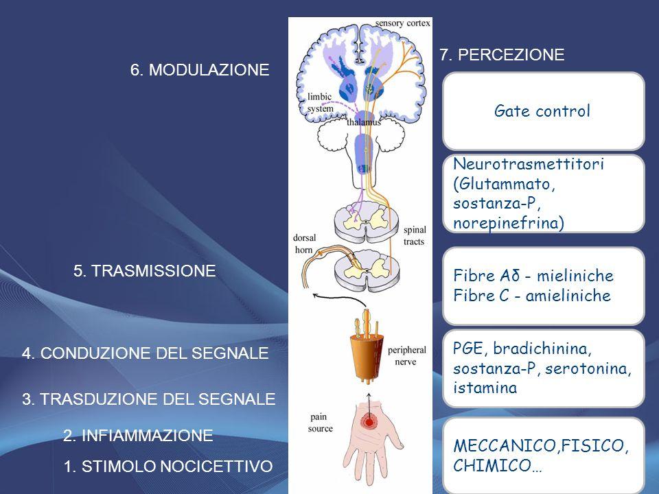 1. STIMOLO NOCICETTIVO 3. TRASDUZIONE DEL SEGNALE 2. INFIAMMAZIONE 4. CONDUZIONE DEL SEGNALE 5. TRASMISSIONE 6. MODULAZIONE 7. PERCEZIONE MECCANICO,FI