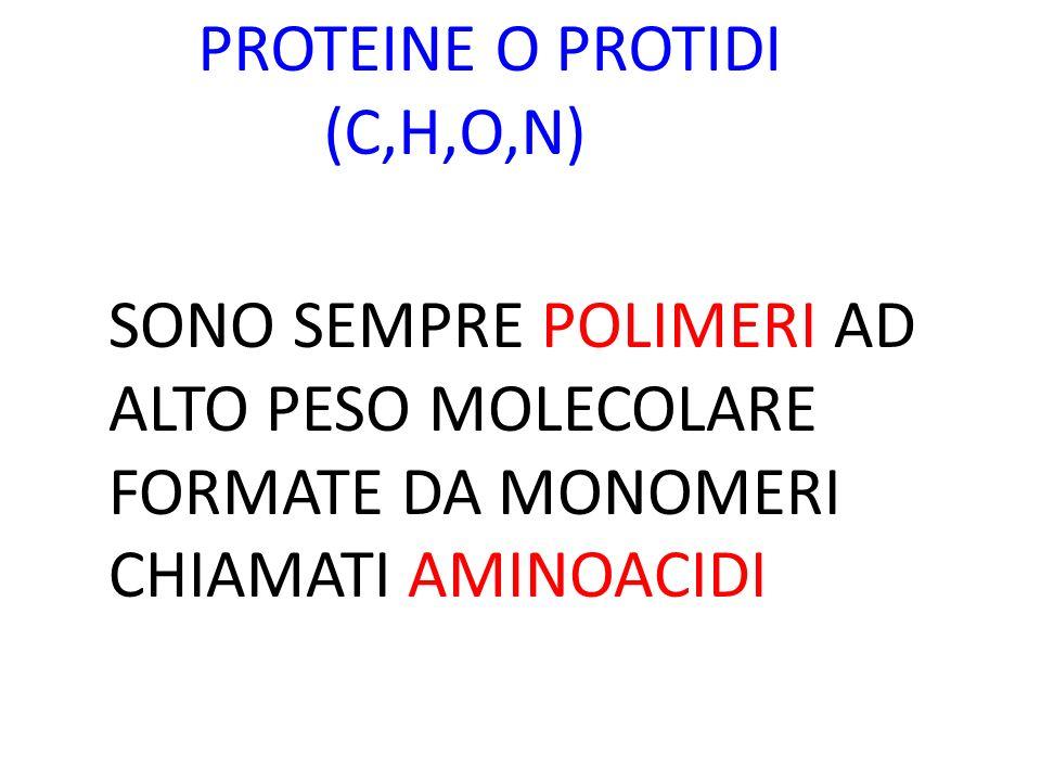 PROTEINE O PROTIDI (C,H,O,N) SONO SEMPRE POLIMERI AD ALTO PESO MOLECOLARE FORMATE DA MONOMERI CHIAMATI AMINOACIDI