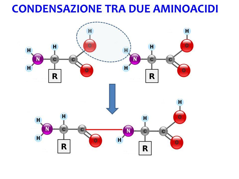 La struttura delle proteine Primaria Es.insulina Secondaria Es.