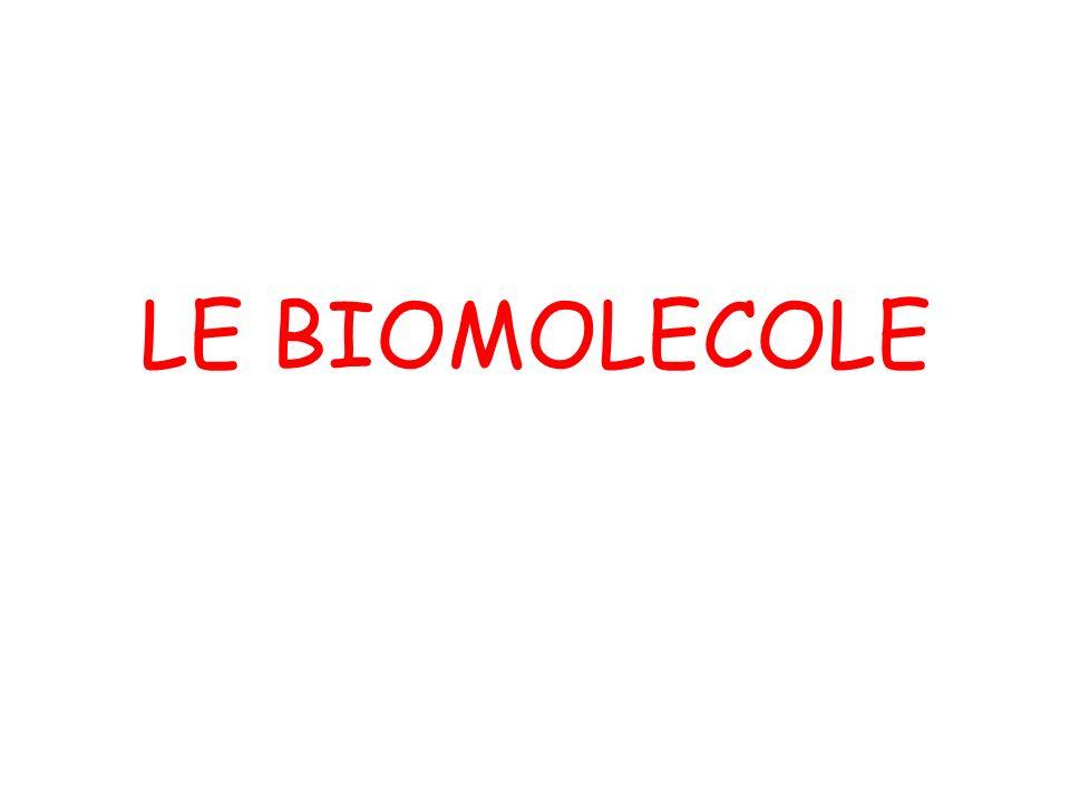 TRI - GLICERIDI 3 acidi grassi1 glicerina Solo legami semplici tra gli atomi di carbonio (tipici dei grassi animali) Anche legami doppi tra gli atomi di carbonio (tipici dei grassi vegetali) (GRUPPO ACIDO O CARBOSSILICO)