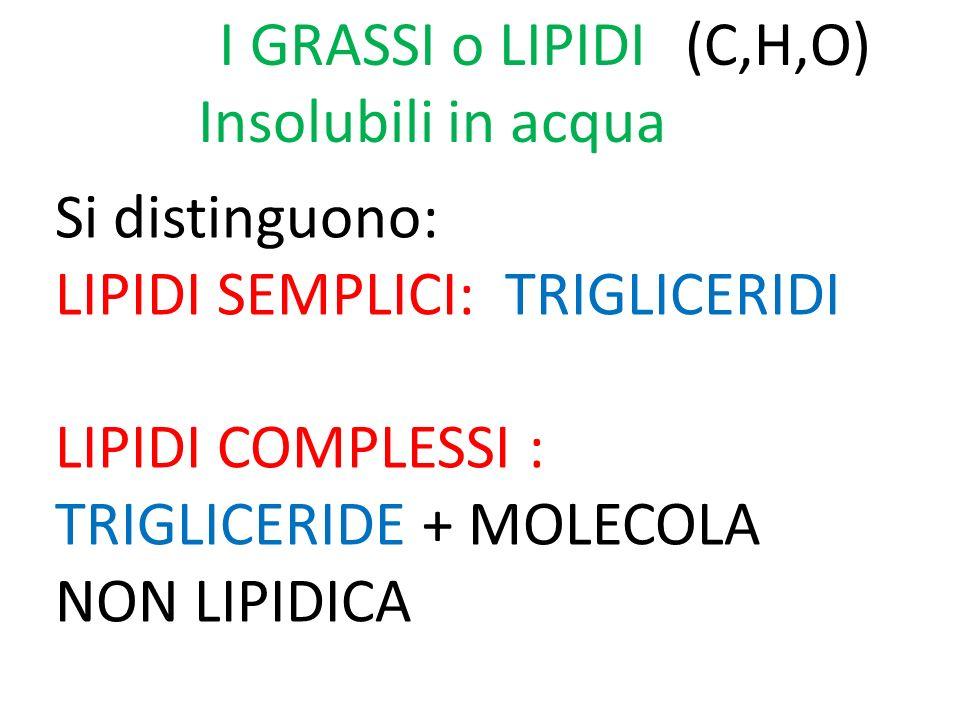 I GRASSI o LIPIDI Insolubili in acqua Si distinguono: LIPIDI SEMPLICI: TRIGLICERIDI LIPIDI COMPLESSI : TRIGLICERIDE + MOLECOLA NON LIPIDICA (C,H,O)