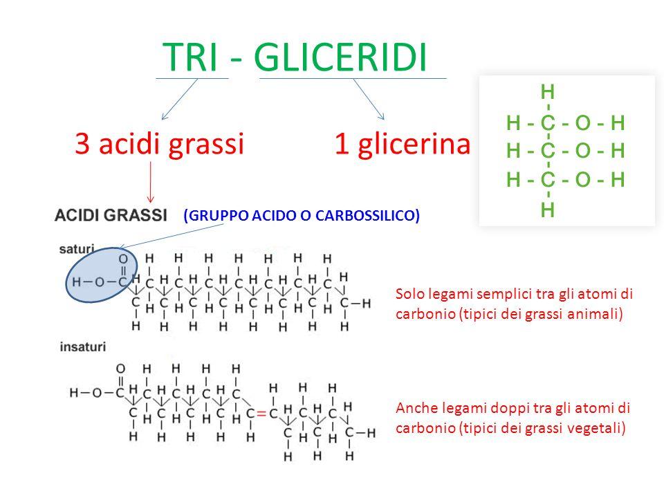 TRI - GLICERIDI 3 acidi grassi1 glicerina Solo legami semplici tra gli atomi di carbonio (tipici dei grassi animali) Anche legami doppi tra gli atomi