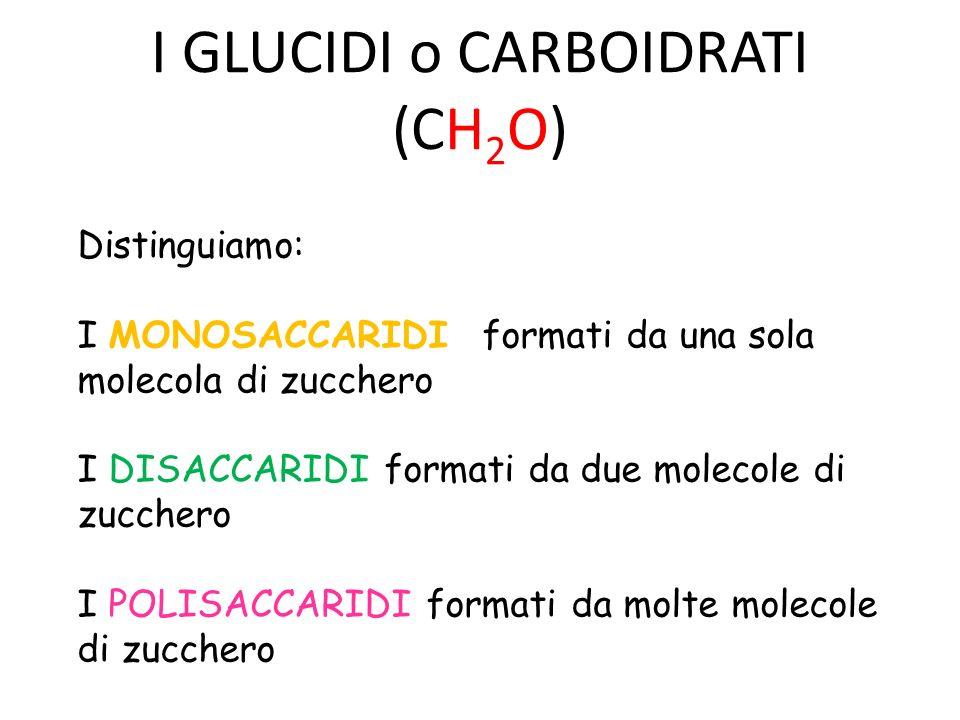 I GLUCIDI o CARBOIDRATI (CH 2 O) Distinguiamo: I MONOSACCARIDI formati da una sola molecola di zucchero I DISACCARIDI formati da due molecole di zucchero I POLISACCARIDI formati da molte molecole di zucchero