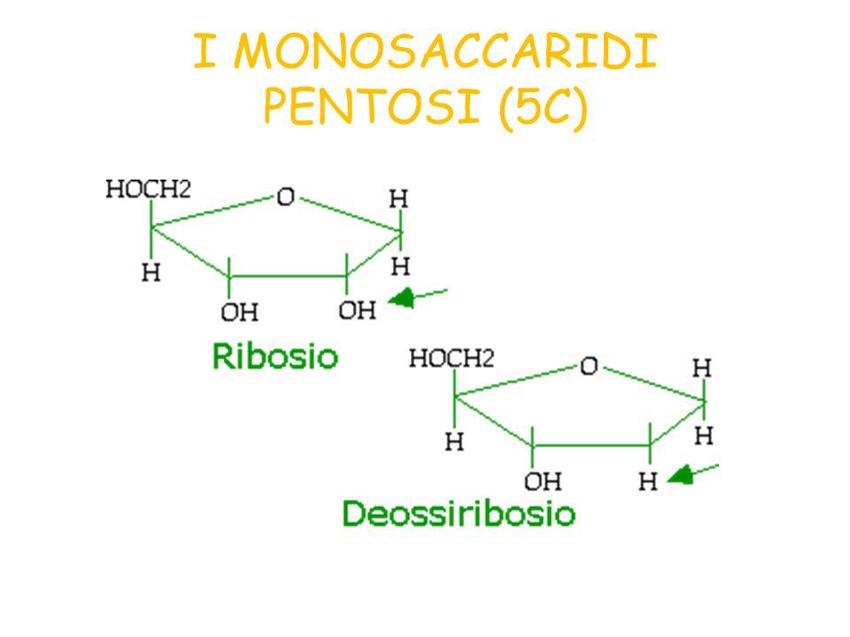 I DISACCARIDI IL SACCAROSIO GLUCOSIOFRUTTOSIO Altri disaccaridi: Maltosio= glucosio + glucosio Lattosio= glucosio + galattosio