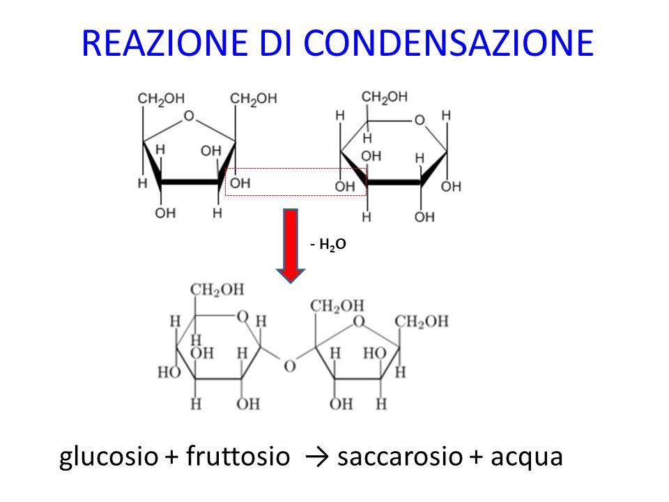 REAZIONE DI CONDENSAZIONE glucosio + fruttosio saccarosio + acqua - H 2 O