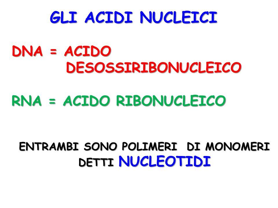 GLI ACIDI NUCLEICI DNA = ACIDO DESOSSIRIBONUCLEICO DESOSSIRIBONUCLEICO RNA = ACIDO RIBONUCLEICO ENTRAMBI SONO POLIMERI DI MONOMERI DETTI NUCLEOTIDI