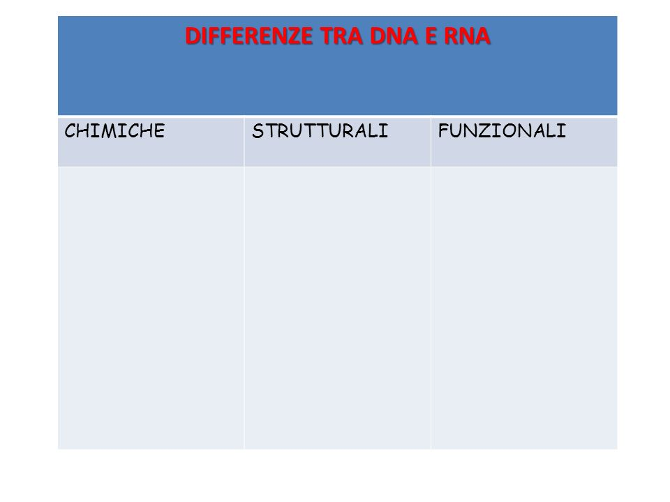 DIFFERENZE TRA DNA E RNA CHIMICHESTRUTTURALIFUNZIONALI