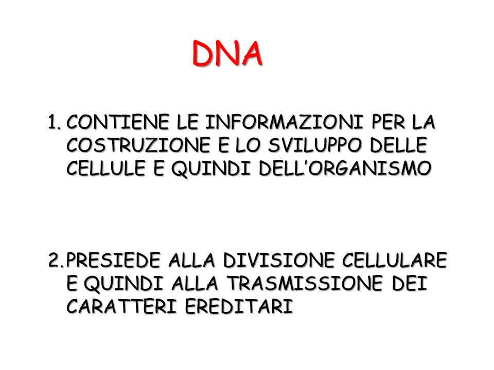 DNA 1.CONTIENE LE INFORMAZIONI PER LA COSTRUZIONE E LO SVILUPPO DELLE CELLULE E QUINDI DELLORGANISMO 2.PRESIEDE ALLA DIVISIONE CELLULARE E QUINDI ALLA