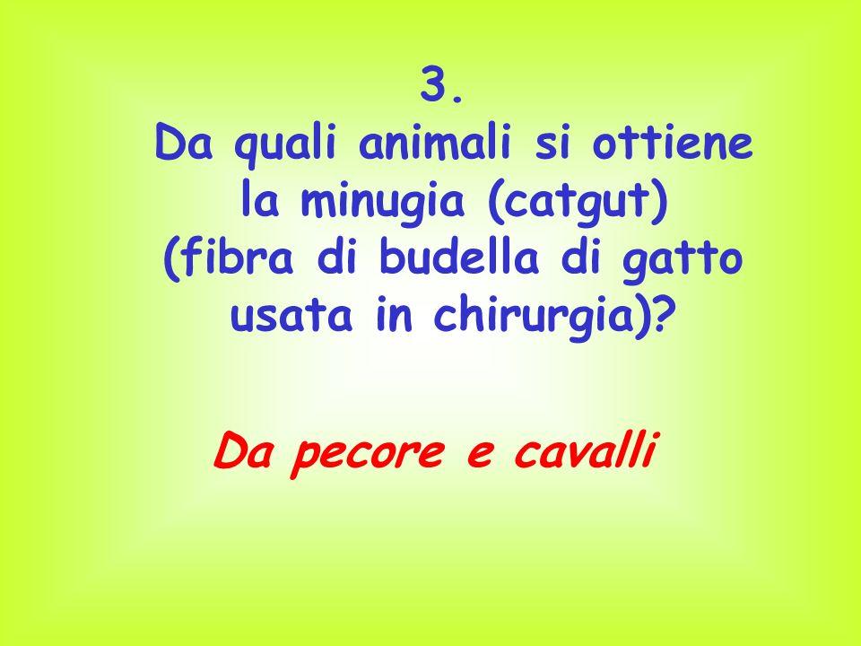 3. Da quali animali si ottiene la minugia (catgut) (fibra di budella di gatto usata in chirurgia)? Da pecore e cavalli