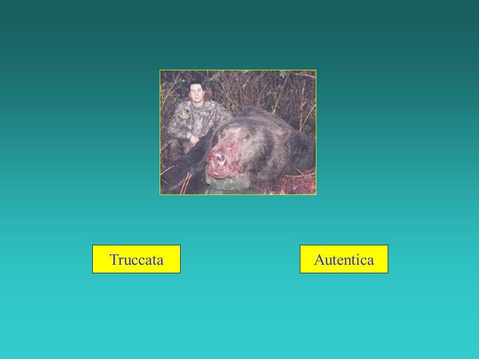 Questa foto fu presa in Alaska nel novembre del 2001.