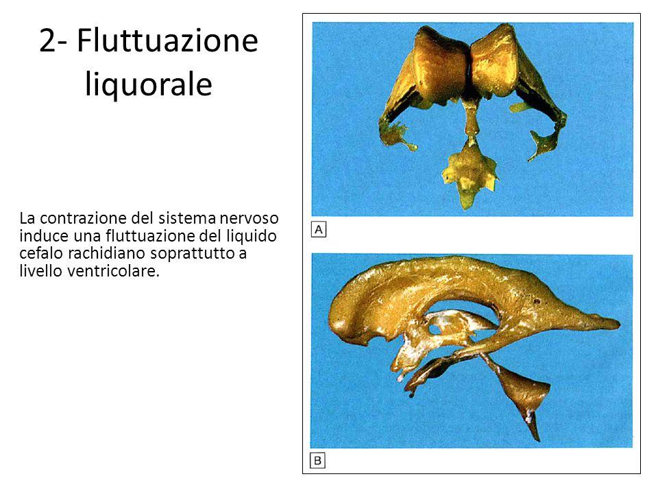 2- Fluttuazione liquorale La contrazione del sistema nervoso induce una fluttuazione del liquido cefalo rachidiano soprattutto a livello ventricolare.